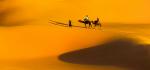 Cat1 C 069 Camel Trek by Jim Turner