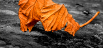 22 Leaf Resting by Linda van Geene