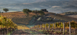 26 Early Light On Autumn Vines by James McCracken