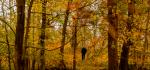 03 Ashridge Autumn by Linda van Geene