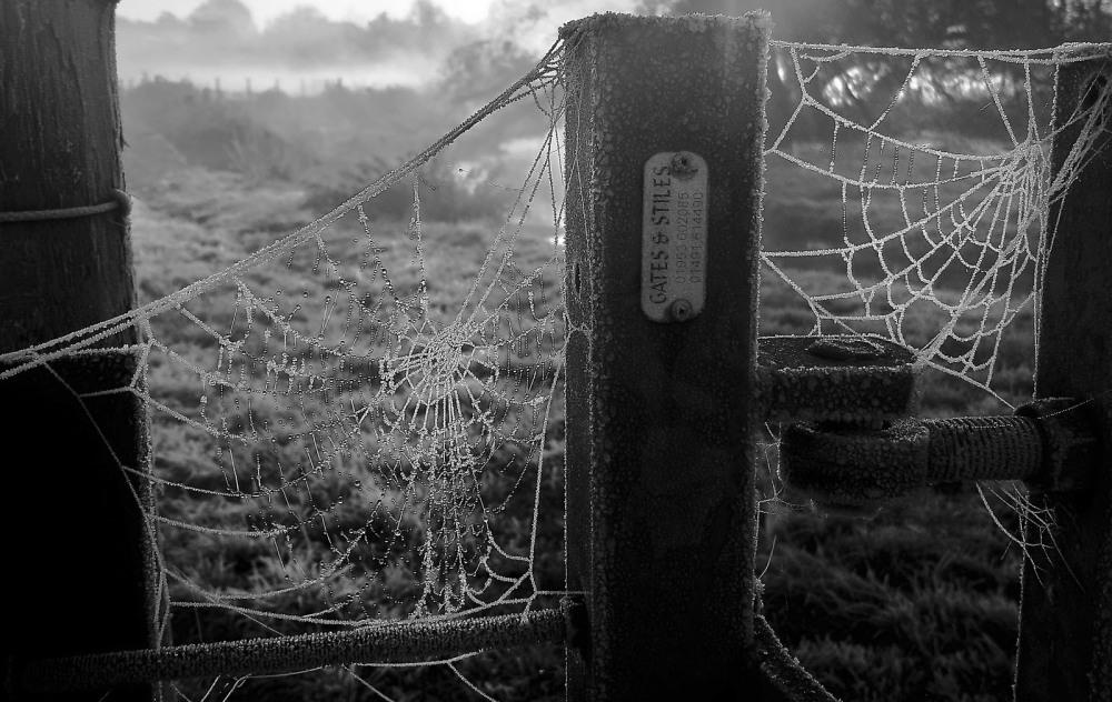 09 Jurassic Spider Webs by Sue Case