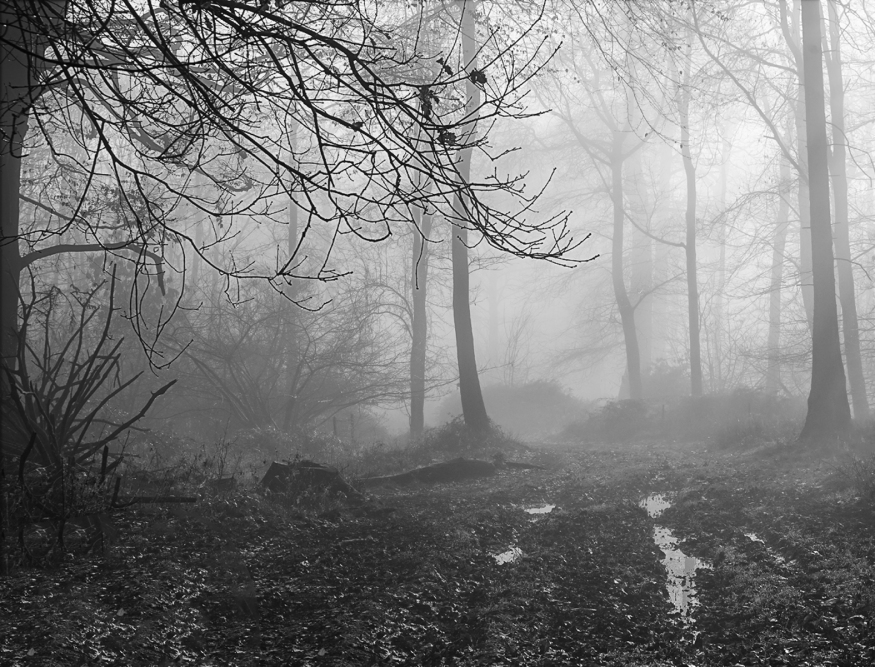 01 Misty Ashridge by Hilary Moore