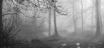 01 Misty Ashridge by Hilary Moore