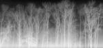 08 Dark Wood by John Humphrey