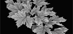 29 Fresh Foliage by Philip Byford