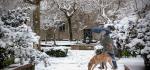 14 Snow In A Mountain Village by James McCracken