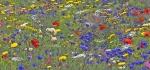 Wildflower garden in watercolour by Ian Shaw