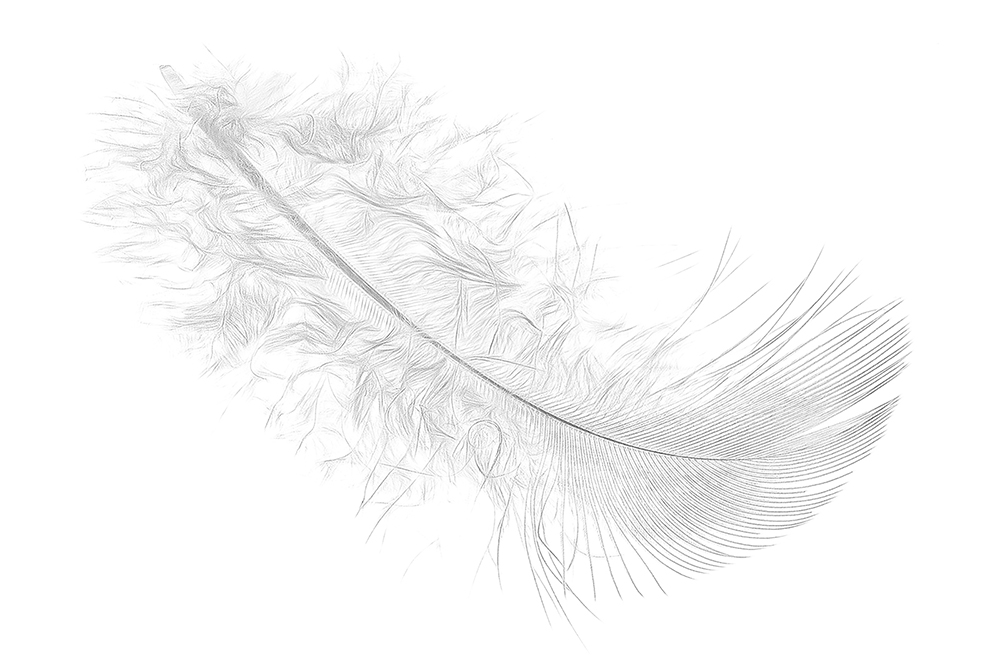 Feather by John Humphrey
