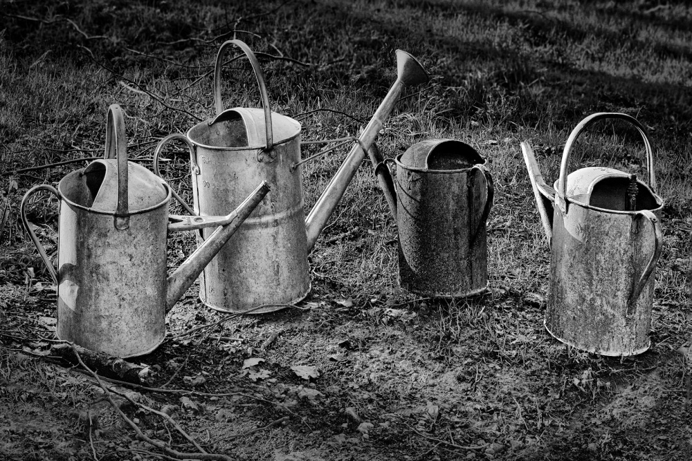 12 Watering Can Cancan by Philip Byford