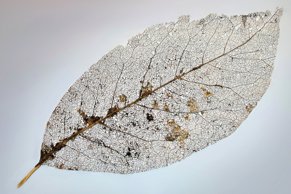 14 Decayed Leaf by Philip Byford