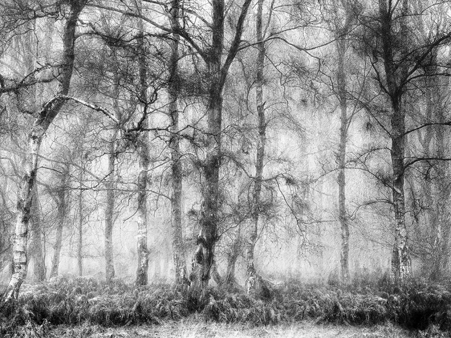 Ashridge mist by John Humphrey