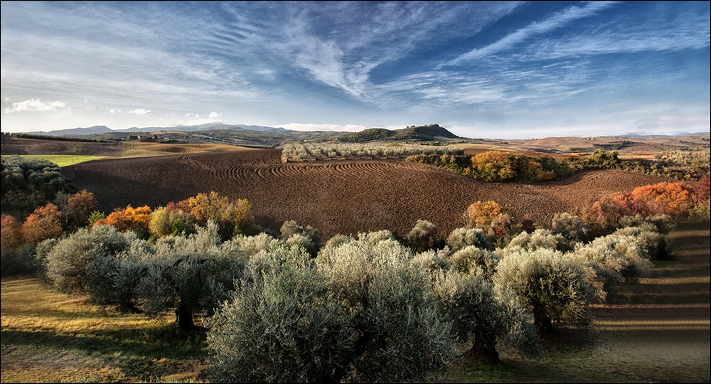 Autumn tones beyond an olive grove by James McCracken