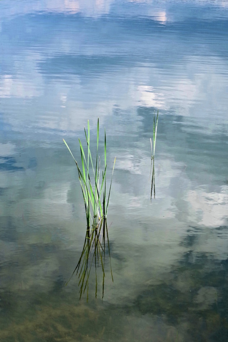 Reeds and reflections by Philip Byford