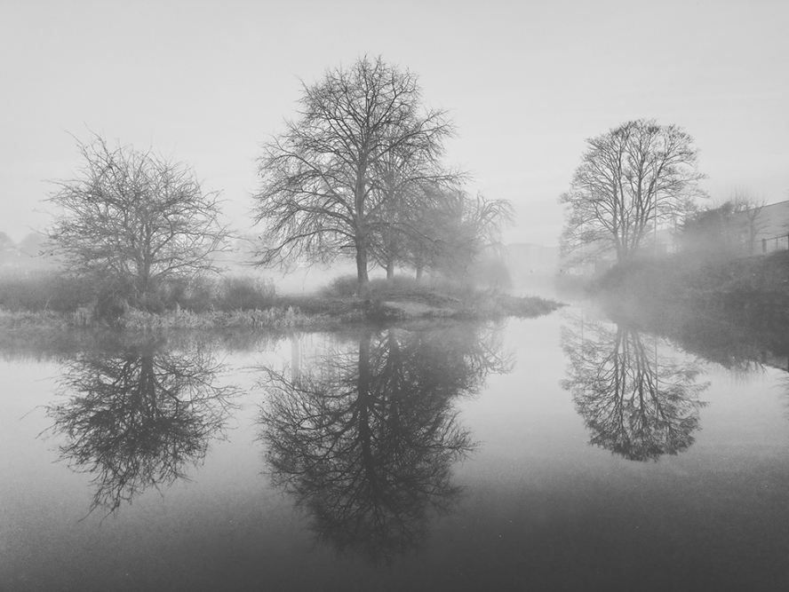 Transformed by fog by Sue Case