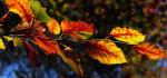 30 Autumn by Sue Case
