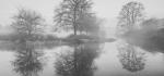 Transformed by fog by Sue Case