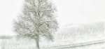 Ash tree by John Humphrey