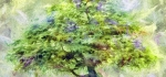 Maple tree by John Humphrey
